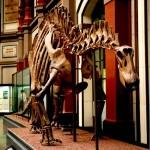 Dinosaurier im Naturkundemuseum (Bild: Eduard Sola Vazquez)